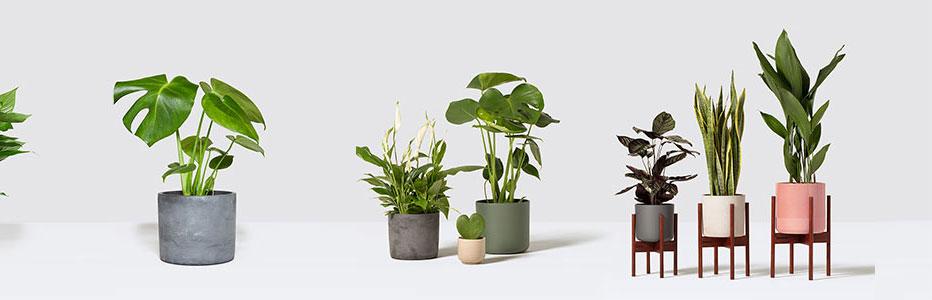 Patch Plants