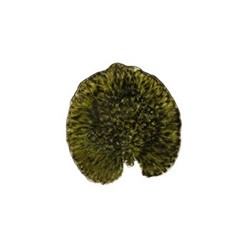 Riviera Forest Set of 6 alchemille leaf plates, 18cm, green