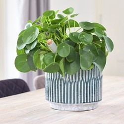 Onno Planter, H25 x W25 x D25cm, denim