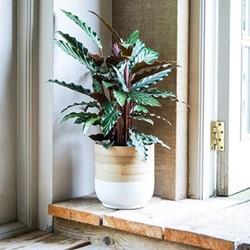 Bamboo Planter, H20 x W28 x D28cm, white