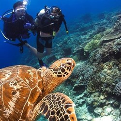 Scuba diving PADI course fund
