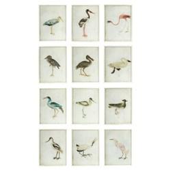 Bird Set of 12 bird paintings, H30 x W24cm