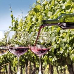 Wine tasting tour for two
