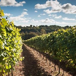 Create your own english sparkling wine and private tour at Hambledon vineyard