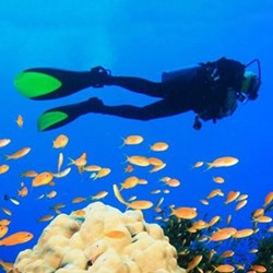 Diving and spearfishing for two on the Great Barrier Reef