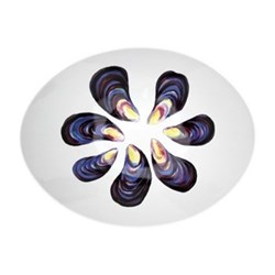 Mussels Oval bowl, 27cm