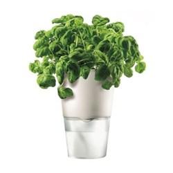 Self watering herb pot, 11cm, chalk white