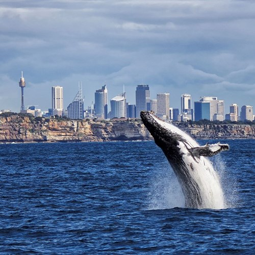 Whale watching for two
