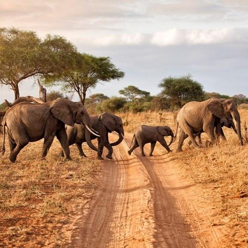 Daytime safari for two