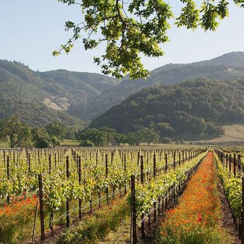 Two night wine getaway in Sonoma County
