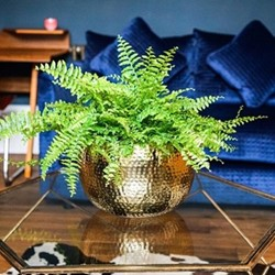 Hammered Bowl planter, H14 x W19 x D19cm, gold