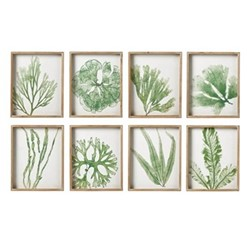Set of eight coral and seaweed prints, H55 x W44 x D5cm, green