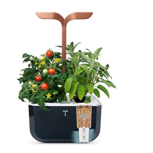 Exky Smart Indoor garden, 37 x 19 x 17cm, black/copper