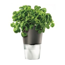 Self watering herb pot, 11cm, dark grey