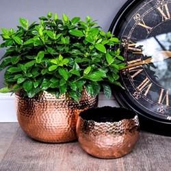 Hammered Bowl planter, H14 x W19 x D19cm, copper