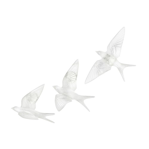 Hirondelles Clear Swallows